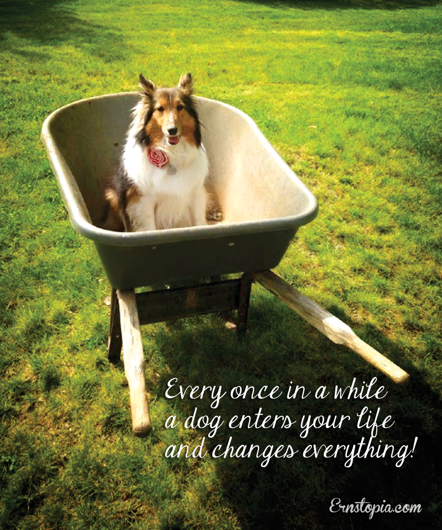 ginger in wheel barrow quote*