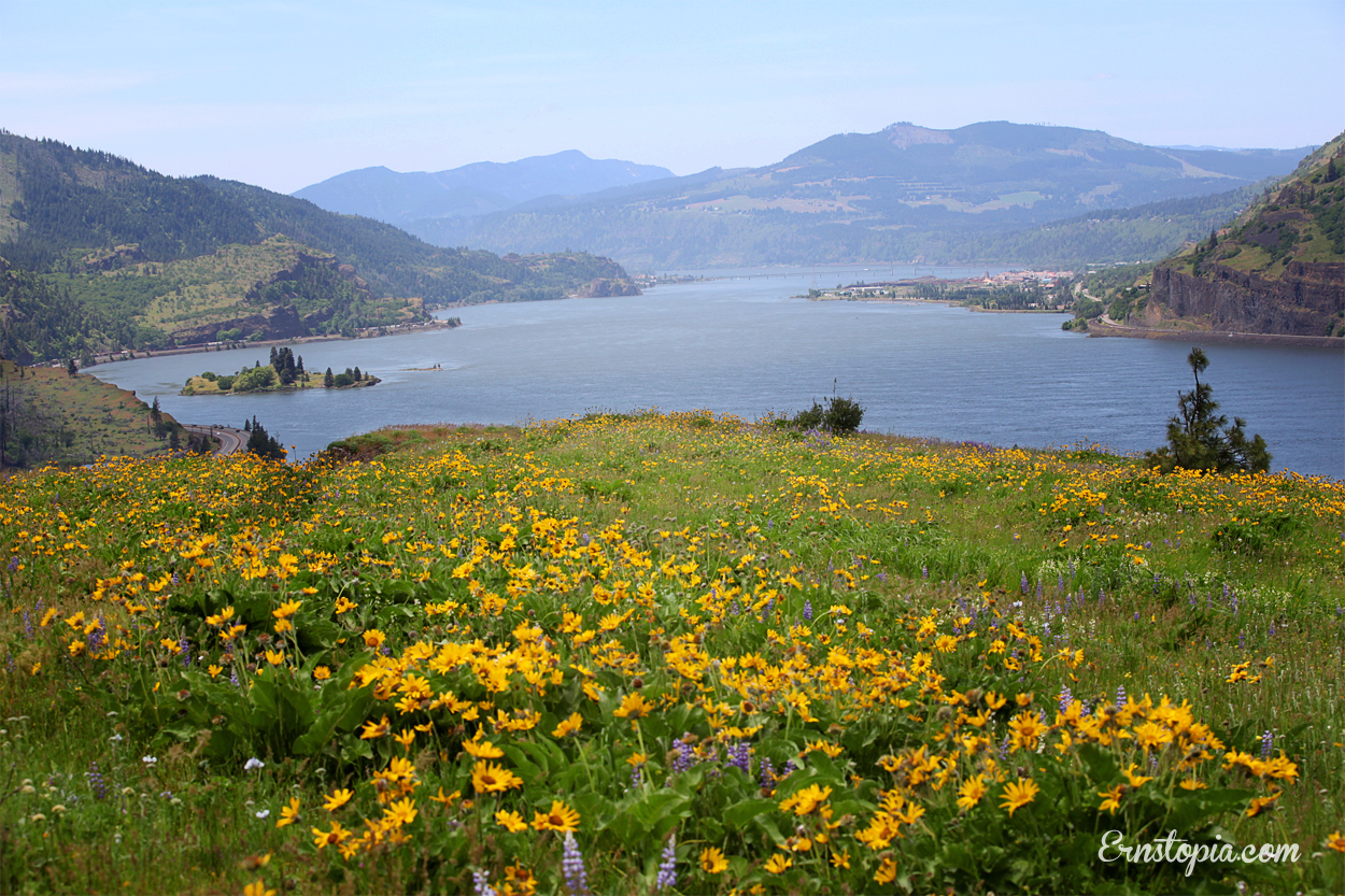 Wildflowers on the Mosier Plateau