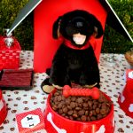How to Throw a Great Dog Birthday Party with Items From the Dollar Tree